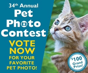 Pet Photo Voting 2019 - DR