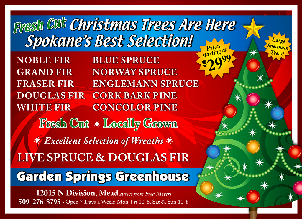 garden springs christmas trees - Fred Meyer Christmas Trees